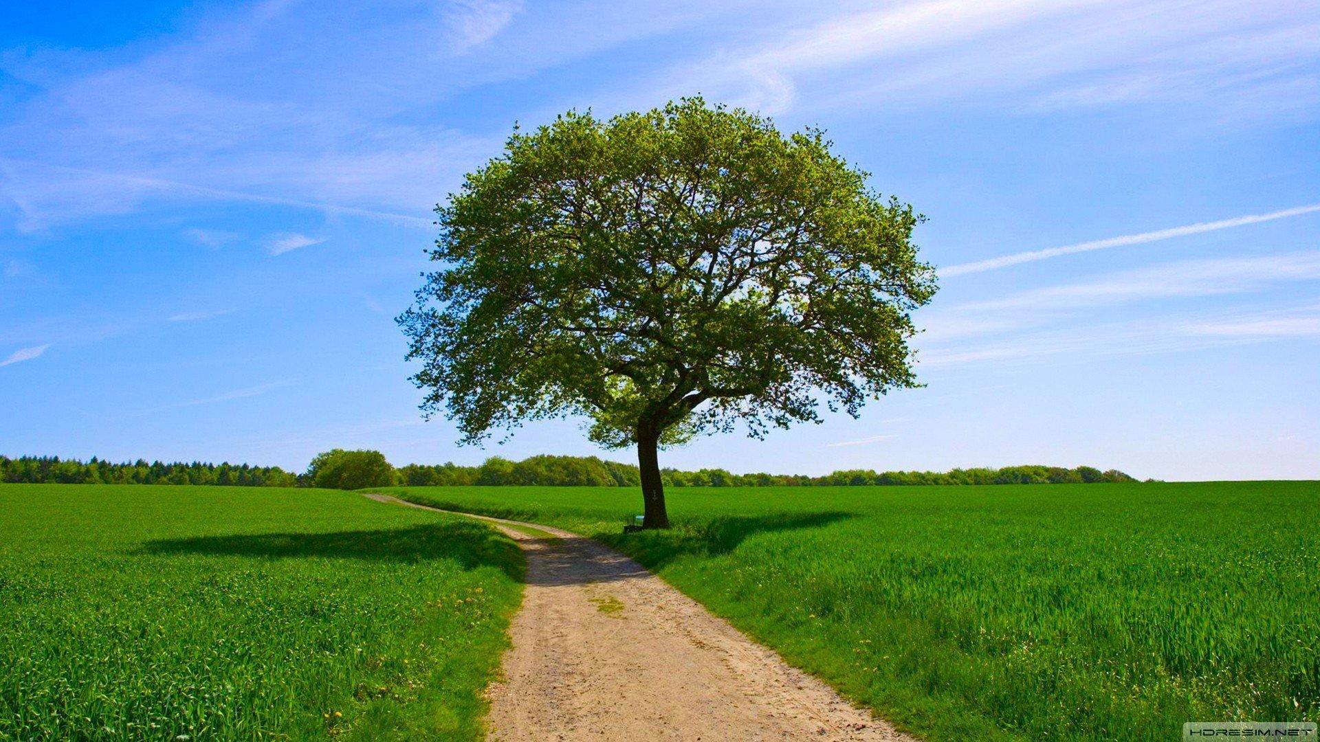зеленое раскидистое дерево без регистрации